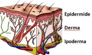 La pelle struttura