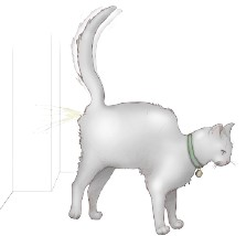 Gatto piscia