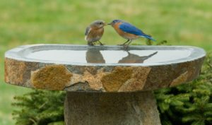 Vaschetta bagno uccelli2